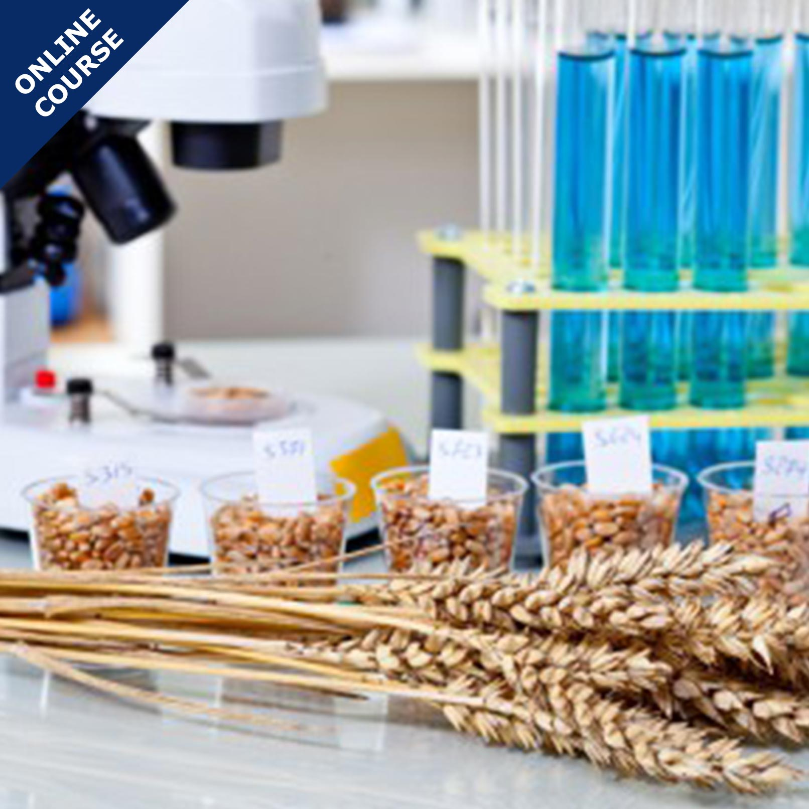 Picture of Online Course in Food Microbiology